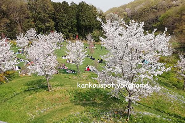 桜がきれいなピクニック広場